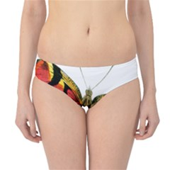 Butterfly Bright Vintage Drawing Hipster Bikini Bottoms