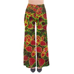 Flower Red Nature Garden Natural Pants