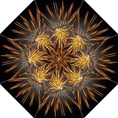 Pyrotechnics Thirty Eight Golf Umbrellas by Nexatart