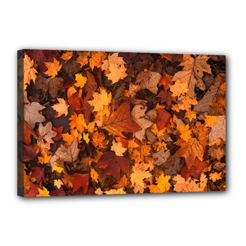 Fall Foliage Autumn Leaves October Canvas 18  X 12  by Nexatart