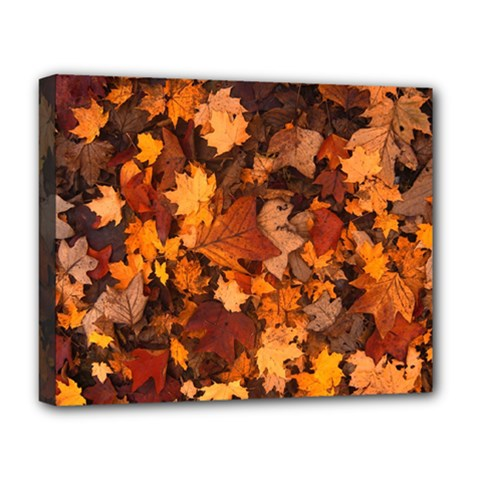 Fall Foliage Autumn Leaves October Deluxe Canvas 20  X 16   by Nexatart