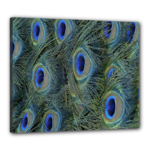 Peacock Feathers Blue Bird Nature Canvas 24  X 20  by Nexatart