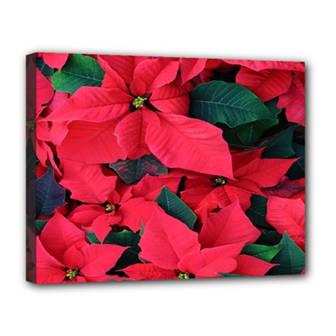 Red Poinsettia Flower Canvas 14  X 11  by Mariart