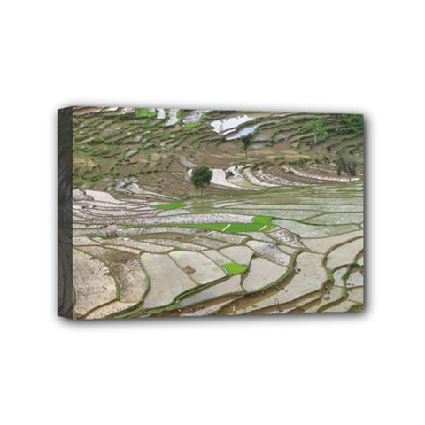 Rice Fields Terraced Terrace Mini Canvas 6  X 4  by Nexatart