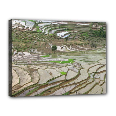 Rice Fields Terraced Terrace Canvas 16  X 12  by Nexatart