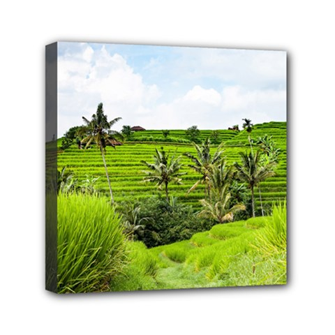 Bali Rice Terraces Landscape Rice Mini Canvas 6  X 6
