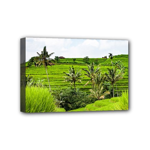 Bali Rice Terraces Landscape Rice Mini Canvas 6  X 4  by Nexatart
