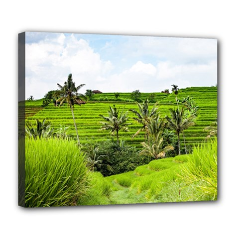 Bali Rice Terraces Landscape Rice Deluxe Canvas 24  X 20   by Nexatart