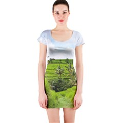 Bali Rice Terraces Landscape Rice Short Sleeve Bodycon Dress