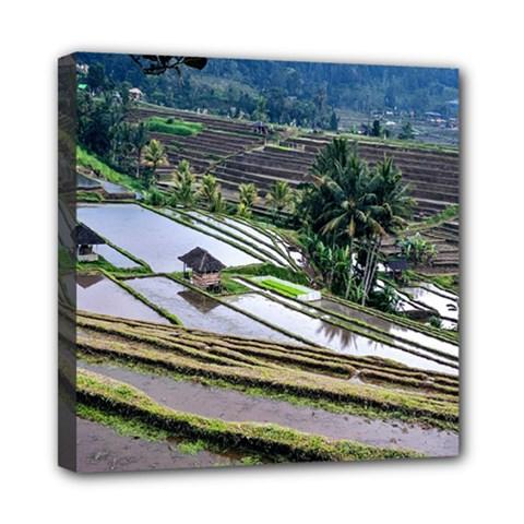 Rice Terrace Rice Fields Mini Canvas 8  X 8