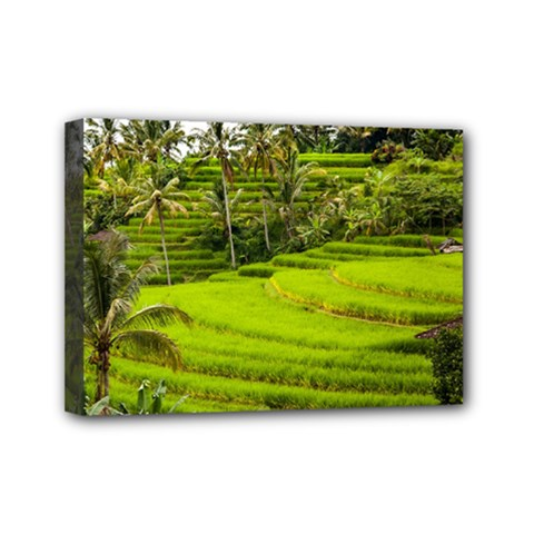 Rice Terrace Terraces Mini Canvas 7  X 5