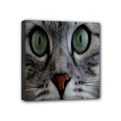 Cat Face Eyes Gray Fluffy Cute Animals Mini Canvas 4  X 4  by Mariart