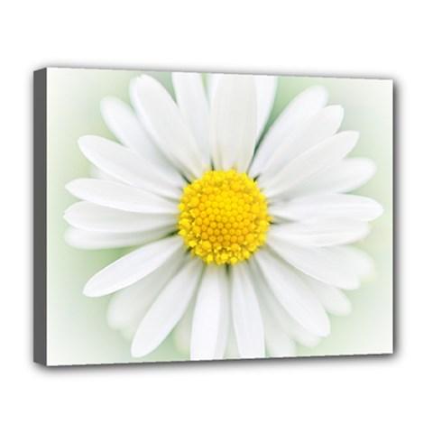 Art Daisy Flower Art Flower Deco Canvas 14  X 11  by Nexatart