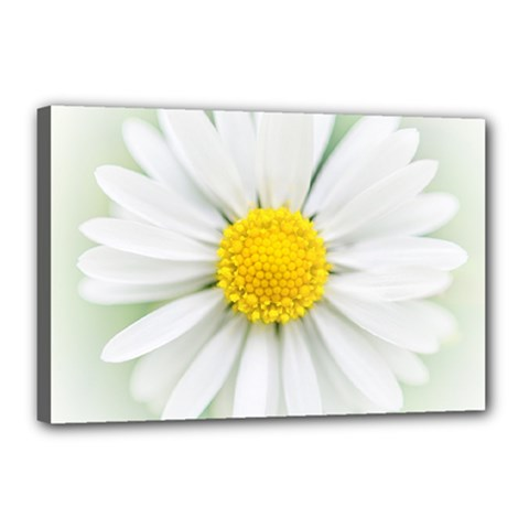 Art Daisy Flower Art Flower Deco Canvas 18  X 12
