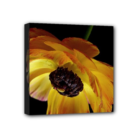 Ranunculus Yellow Orange Blossom Mini Canvas 4  X 4