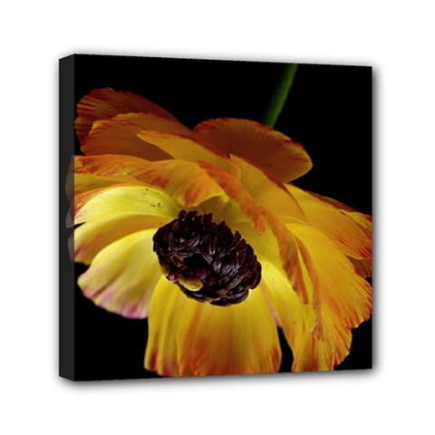 Ranunculus Yellow Orange Blossom Mini Canvas 6  X 6