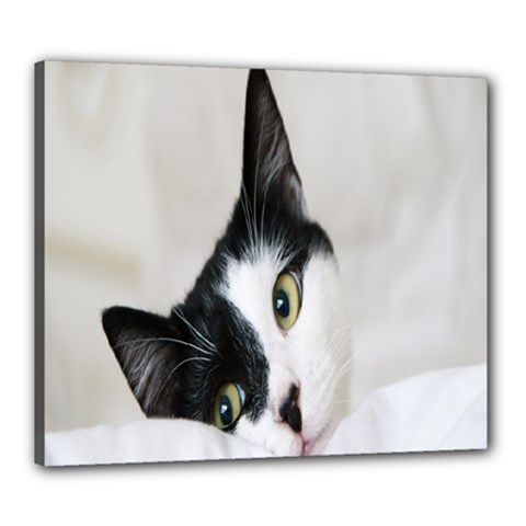 Cat Face Cute Black White Animals Canvas 24  X 20  by Mariart