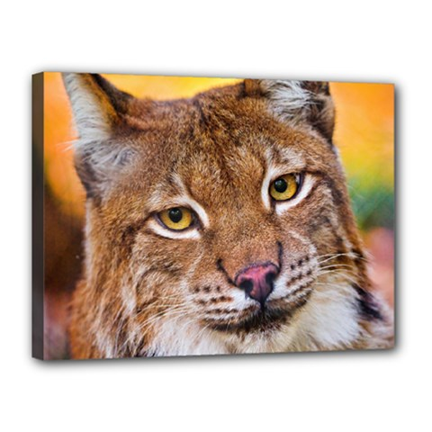 Tiger Beetle Lion Tiger Animals Canvas 16  X 12  by Mariart