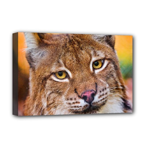 Tiger Beetle Lion Tiger Animals Deluxe Canvas 18  X 12   by Mariart