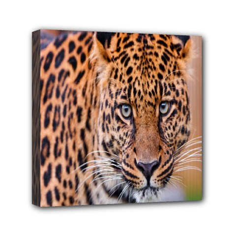 Tiger Beetle Lion Tiger Animals Leopard Mini Canvas 6  X 6  by Mariart