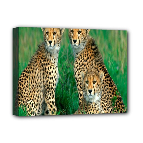 Animals Cheetah Deluxe Canvas 16  X 12   by Jojostore