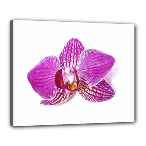 Lilac Phalaenopsis Aquarel  Watercolor Art Painting Canvas 20  X 16