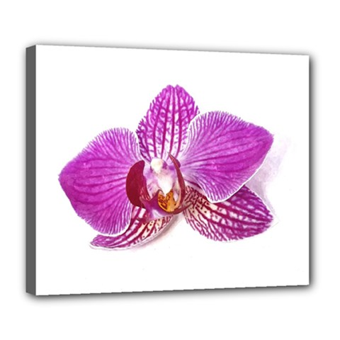 Lilac Phalaenopsis Aquarel  Watercolor Art Painting Deluxe Canvas 24  X 20   by picsaspassion