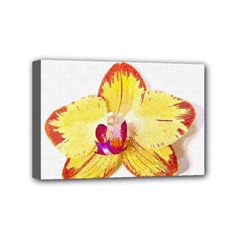 Phalaenopsis Yellow Flower, Floral Oil Painting Art Mini Canvas 6  X 4  by picsaspassion