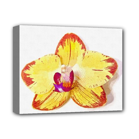 Phalaenopsis Yellow Flower, Floral Oil Painting Art Deluxe Canvas 14  X 11  by picsaspassion