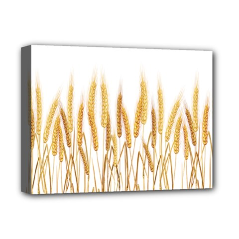 Wheat Plants Deluxe Canvas 16  X 12   by Mariart