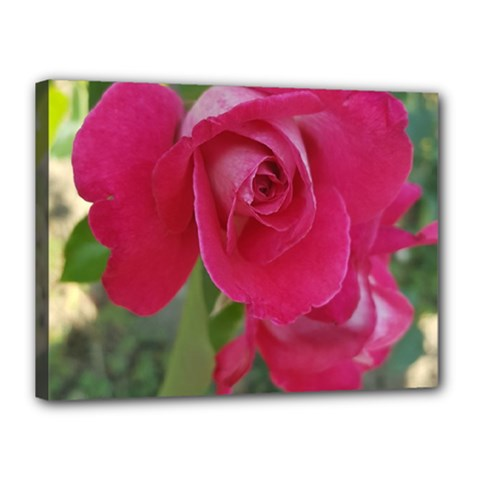 Romantic Red Rose Photography Canvas 16  X 12  by yoursparklingshop