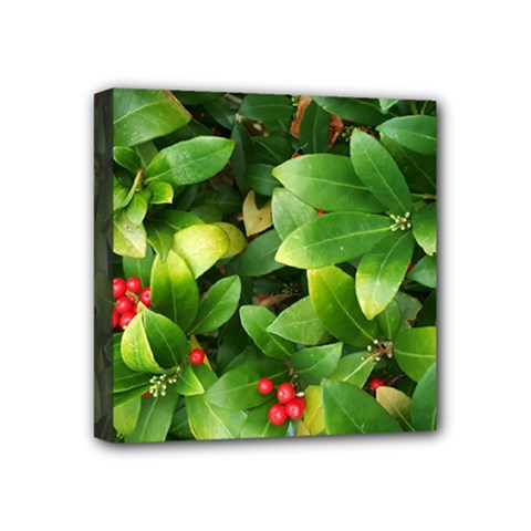 Christmas Season Floral Green Red Skimmia Flower Mini Canvas 4  X 4  by yoursparklingshop