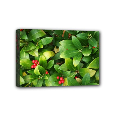 Christmas Season Floral Green Red Skimmia Flower Mini Canvas 6  X 4  by yoursparklingshop
