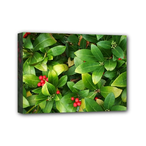 Christmas Season Floral Green Red Skimmia Flower Mini Canvas 7  X 5  by yoursparklingshop
