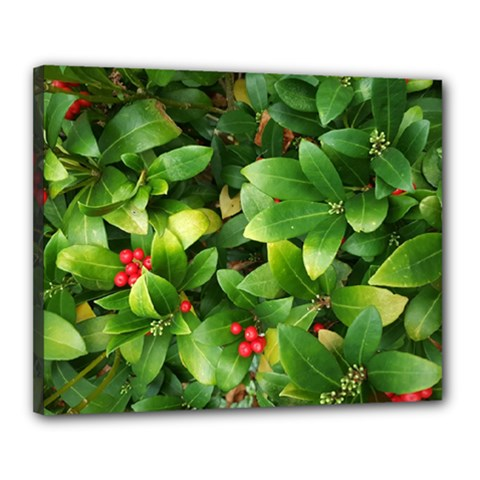 Christmas Season Floral Green Red Skimmia Flower Canvas 20  X 16  by yoursparklingshop