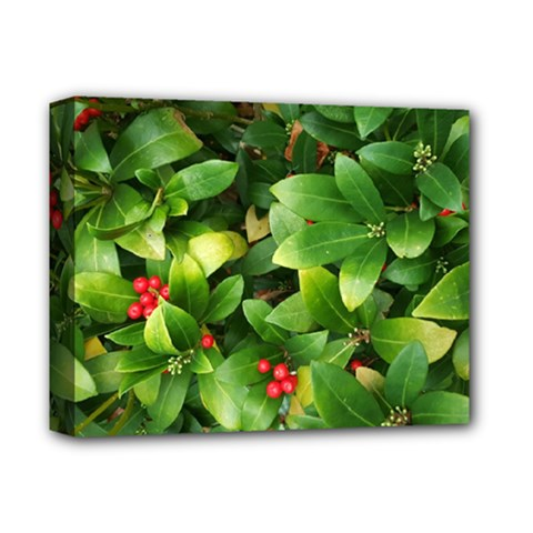 Christmas Season Floral Green Red Skimmia Flower Deluxe Canvas 14  X 11  by yoursparklingshop