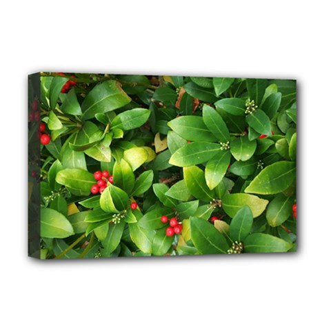 Christmas Season Floral Green Red Skimmia Flower Deluxe Canvas 18  X 12