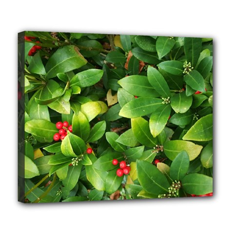 Christmas Season Floral Green Red Skimmia Flower Deluxe Canvas 24  X 20   by yoursparklingshop
