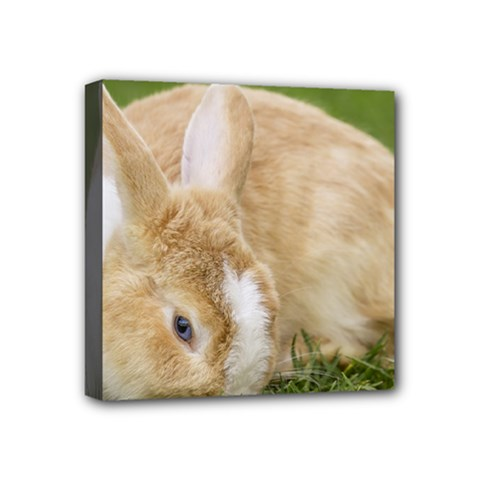 Beautiful Blue Eyed Bunny On Green Grass Mini Canvas 4  X 4  by Ucco