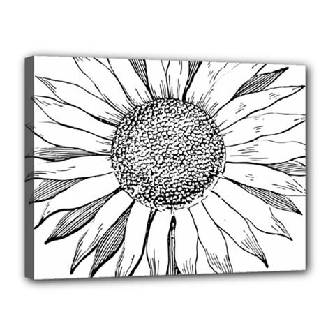 Sunflower Flower Line Art Summer Canvas 16  X 12  by Celenk