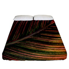 Leaf Colorful Nature Orange Season Fitted Sheet (king Size) by Celenk