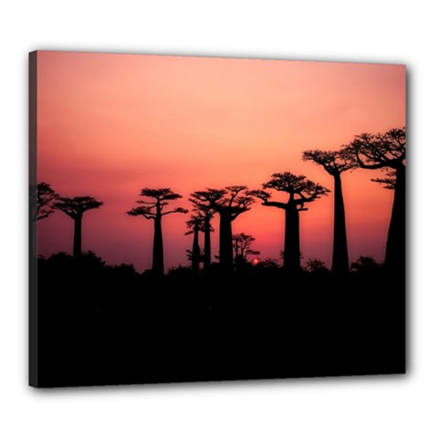 Baobabs Trees Silhouette Landscape Canvas 24  X 20  by BangZart