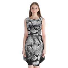 Africa Lion Male Closeup Macro Sleeveless Chiffon Dress