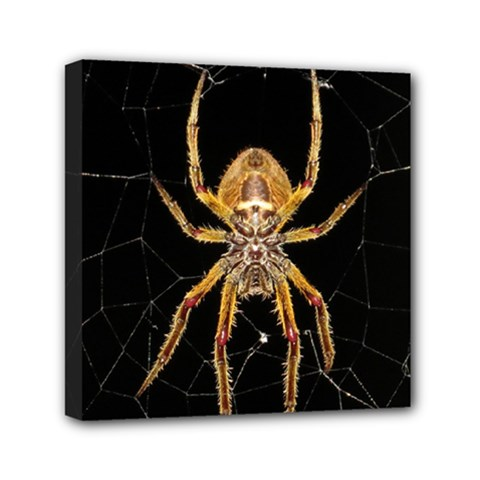 Insect Macro Spider Colombia Canvas Travel Bag