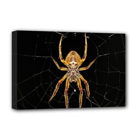 Insect Macro Spider Colombia Deluxe Canvas 18  X 12