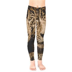 Jaguar Water Stalking Eyes Kids  Legging