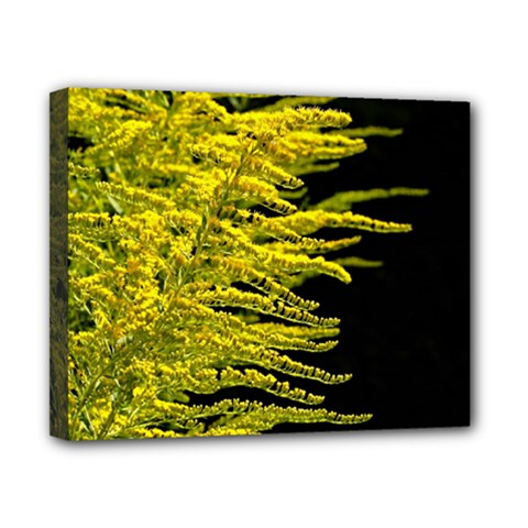 Golden Rod Gold Diamond Canvas 10  X 8  by BangZart