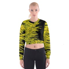 Golden Rod Gold Diamond Cropped Sweatshirt