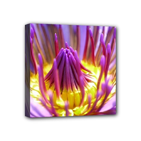 Flower Blossom Bloom Nature Mini Canvas 4  X 4  by BangZart