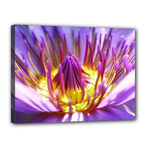 Flower Blossom Bloom Nature Canvas 16  X 12